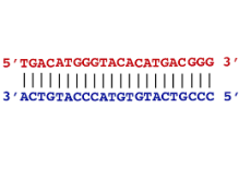 CRISPR - antisense sequences