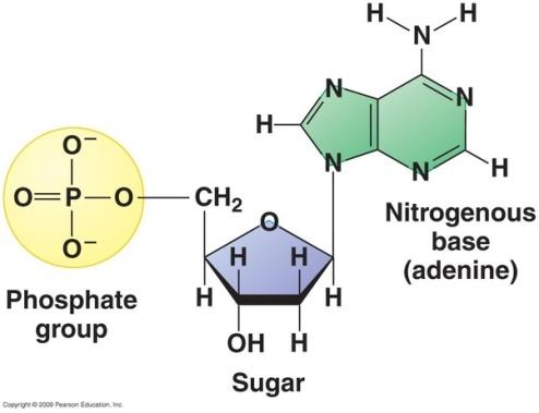 CRISPR - nucleotide