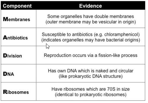 endosymbiosis-evidence_med.jpeg