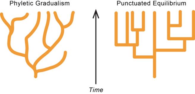 Punctuations-versus-gradualism-1024x494