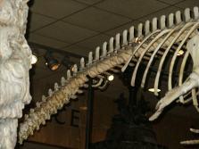 Vestigial - Whale Legs