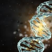 More CRISPR Gene Editing Babies
