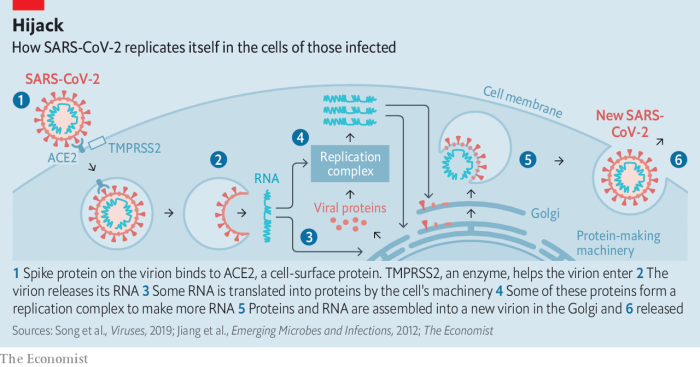 Coronavirus Replication