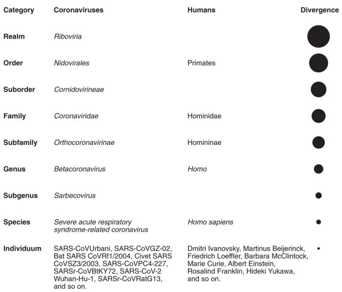 Coronavirus Taxonomy